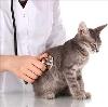Ветеринарные клиники в Коноше